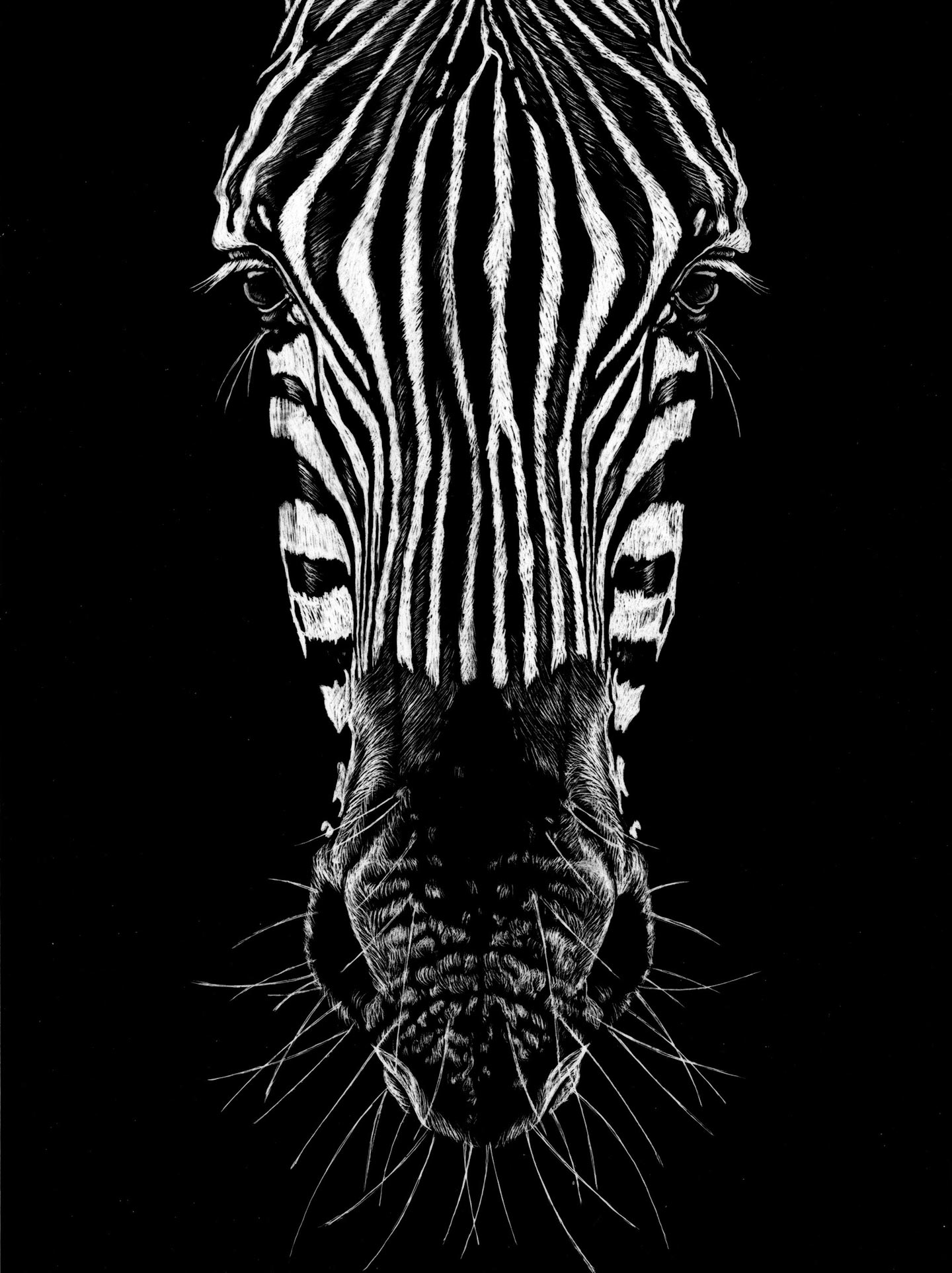Ilustración Científica de una zebra News